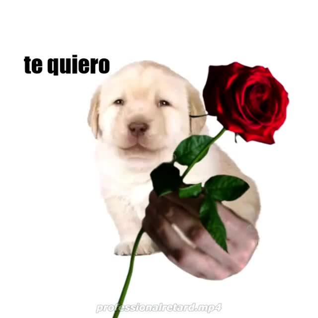 Perrito. .. Como se dice what en espanol