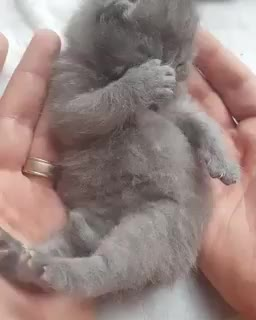 Thursday's Cute Things - 20/7/2017. join list: CuteStuff (2136 subs)Mention History Get yourself a watch that runs 2.7% slower and you'll be living on Mars Time