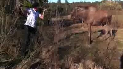 Man vs Moose. .. primal, i bet that felt good. i'd love to be able to scare away a beast that weighed 10x what i do. while it was mid-charge no less!