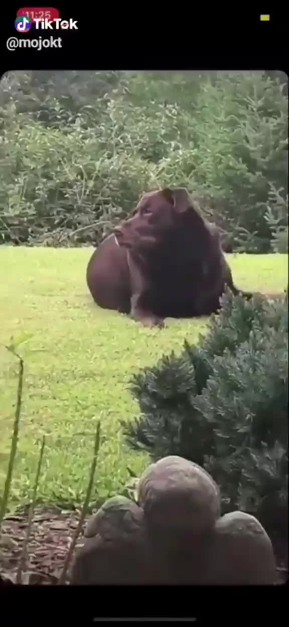 That's a THICC BOI!!!. .. Honestly thought that was a black bear until I saw the ears.