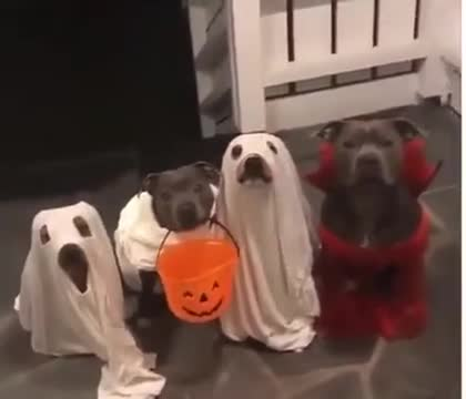 vicious trick or treaters. .. THE GHOST DOG IN THE MIDDLE, SO SPOOKY
