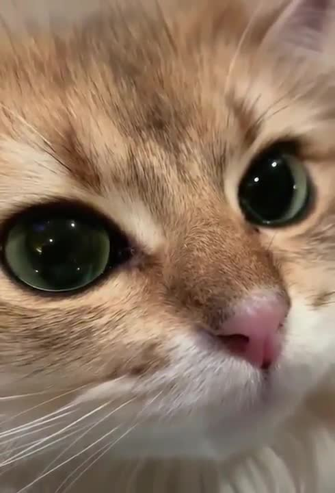 Cat ASMR. .. 12/10 would give pets and scritches