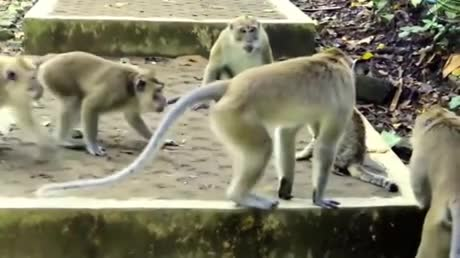 Monkey meets Cat. .. i am slightly concerned about clicking play because i've heard about how dickish monkeys can be
