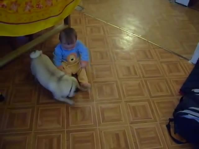 Baby and funny dog. .