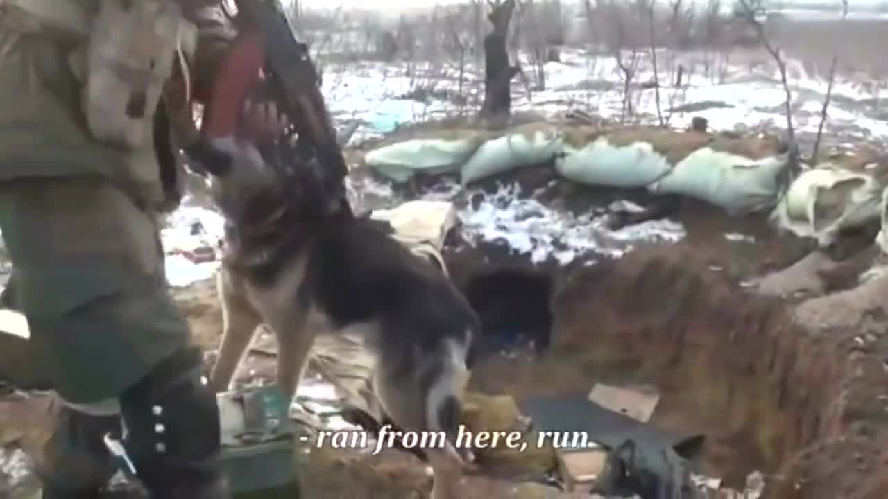 """War doggo. More warzone footage at > Afghanistan Combat Footage - Funker530 Pro Russian rebels find an """"enemy"""" dog guarding an abandoned fighting p"""