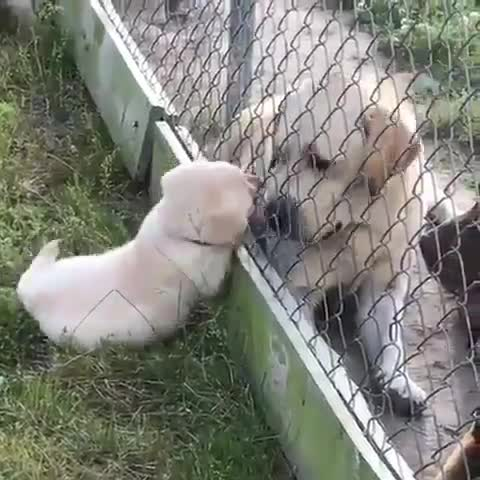 Thursday's Cute Things - 1/6/2017. join list: CuteStuff (2143 subs)Mention Clicks: 128797Msgs Sent: 579556Mention History.. Why there fence between doggo and pupper? Let them be together.