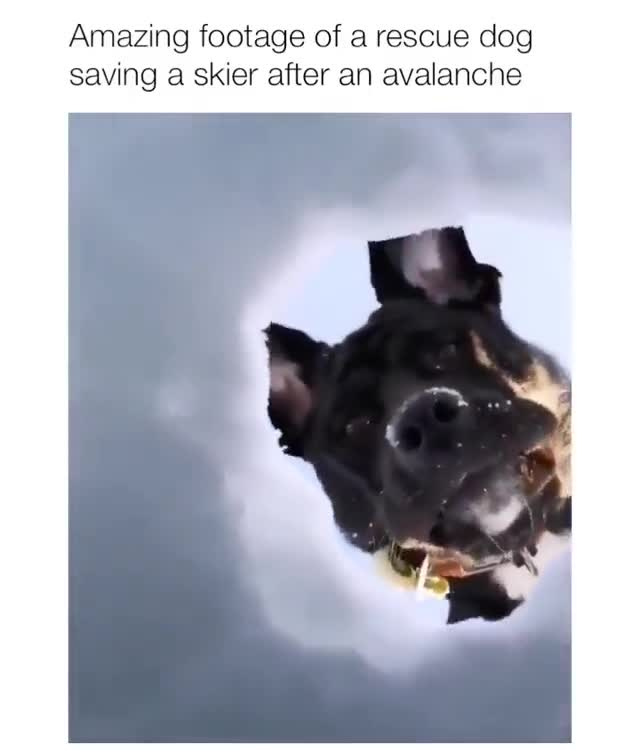 Rescue Dog. .