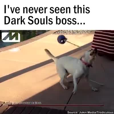 Doggo Souls. . neverborn this Dark Souls boss.