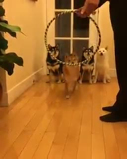 Thursday's Cute Things - 22/6/2017. join list: CuteStuff (2145 subs)Mention History I for one cannot wait for our new fluffy dog overlords... speaking of birthday puppies, Womble's puppy turns 1 this year